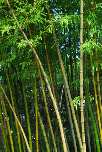 Bountiful Bamboo