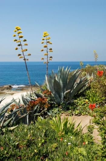 Laguna Beach I
